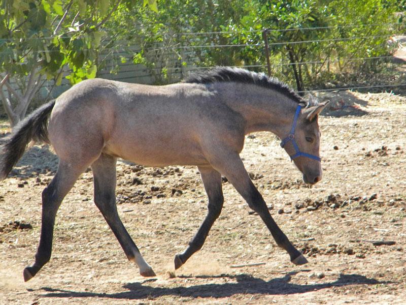 133 2009 Foals