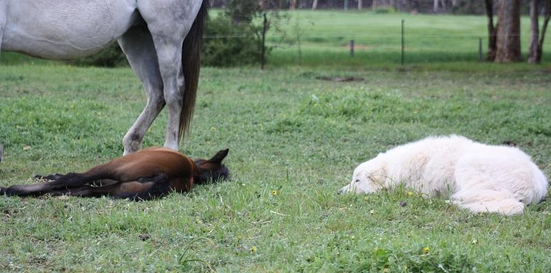 Rosina Bear sleeping web Our Pets & Farm Animals