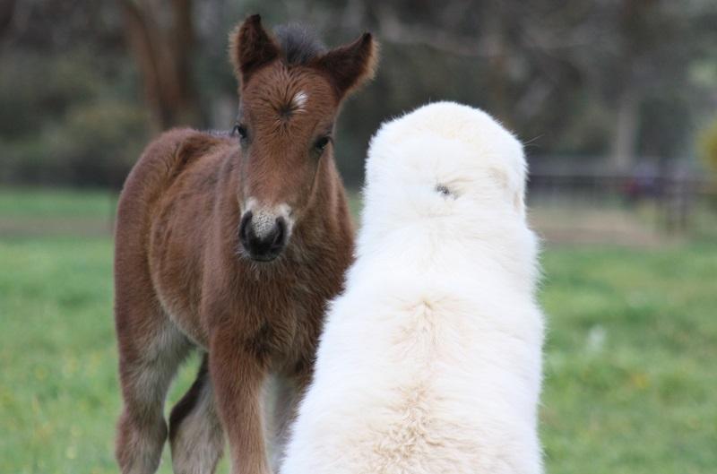 Siobhan Bear web Our Pets & Farm Animals