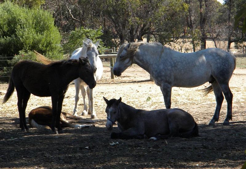 Fibber herd Glenormiston Fibber McGee