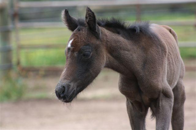 Clare foal2 web Powderbark Clare