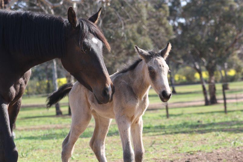 Calvin41 2012 Foals
