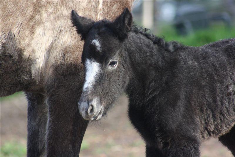 Phoebe1 2012 Foals