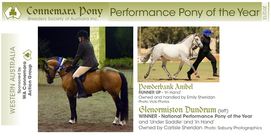 2013 Performance Pony Glenormiston Dundrum does it again: National Performance Pony of the Year!