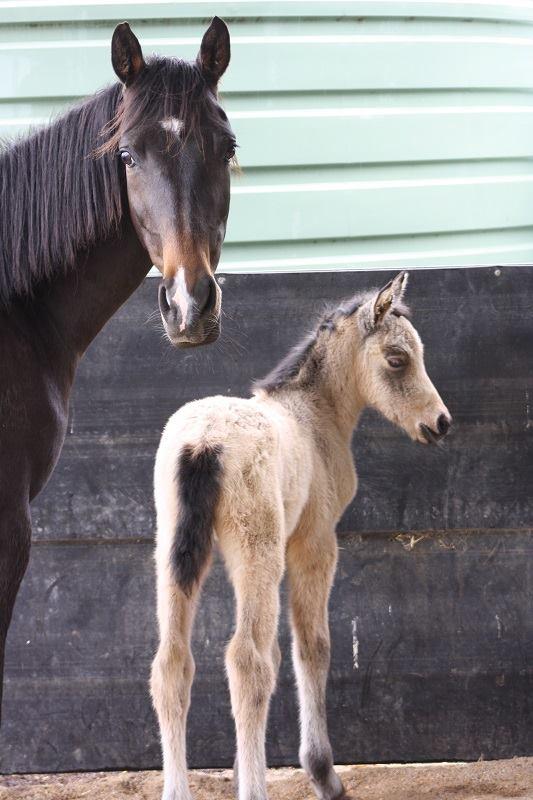 Esme1 2014 Foals