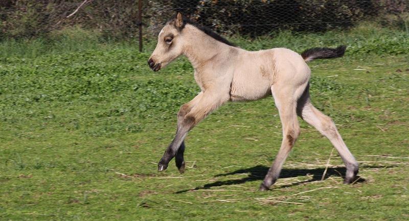 Esme2 2014 Foals
