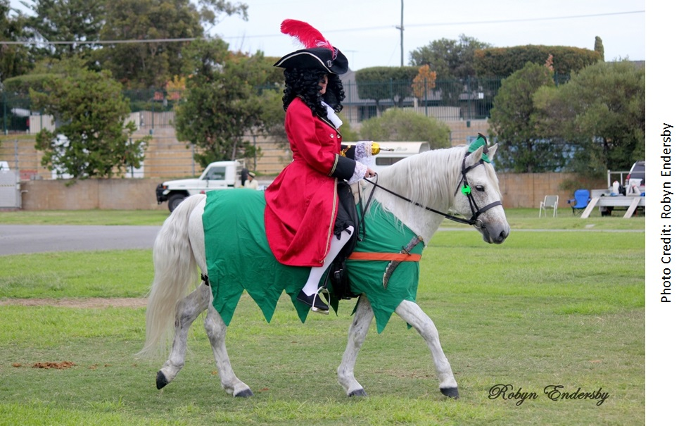 Fibber APSB Fancy Dress2 web Success again for our all round performance stallion, Glenormiston Fibber McGee.