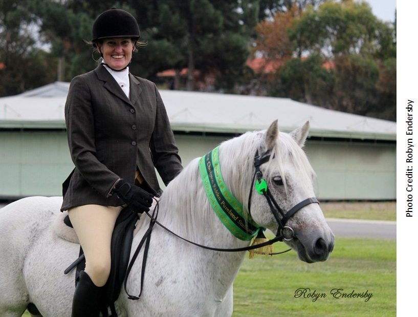 Fibber APSB Ridden1 Success again for our all round performance stallion, Glenormiston Fibber McGee.