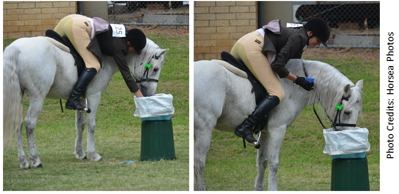 Fibber HandyPony web Success again for our all round performance stallion, Glenormiston Fibber McGee.