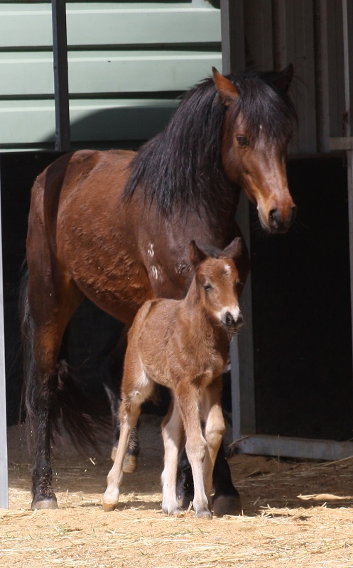 IMG 2329 crop email 2014 Foals