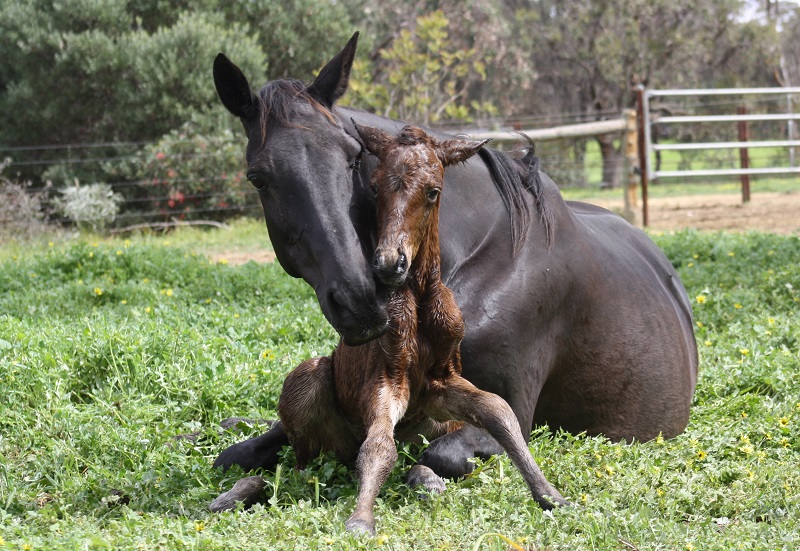 IMG 3053 crop email 2014 Foals