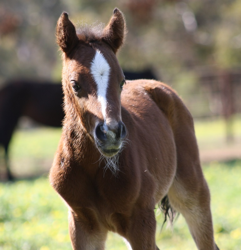 IMG 3770 crop email 2014 Foals