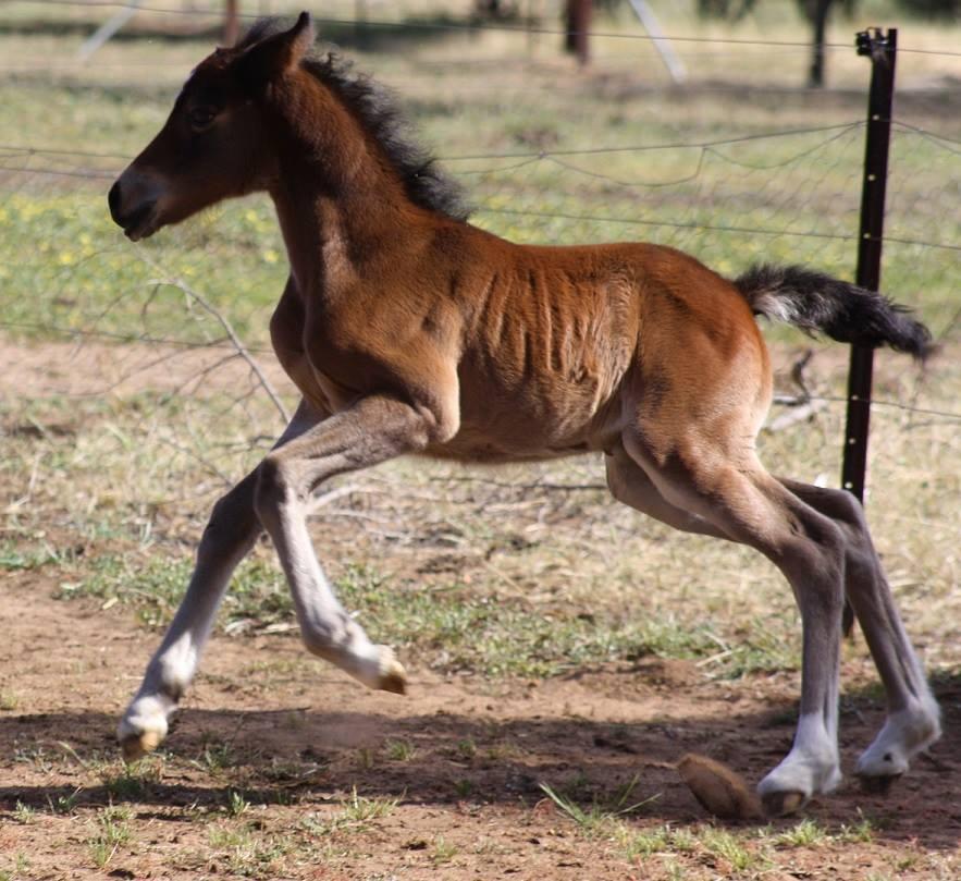 Jasmine11 2013 Foals