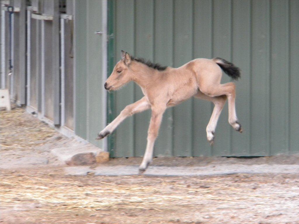 Leitrim1 2010 Foals