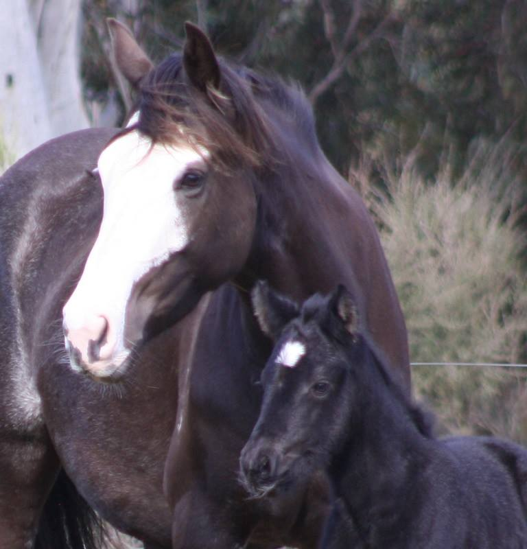 Milly3 2014 Foals