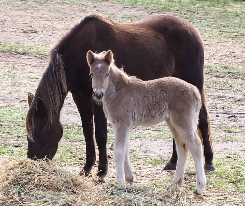 Sylvia2 2014 Foals