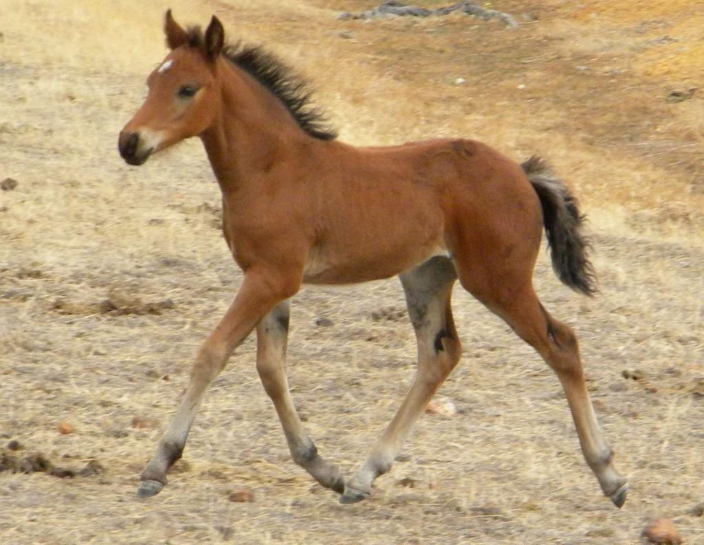 dscn0095 crop 1024x794 2009 Foals