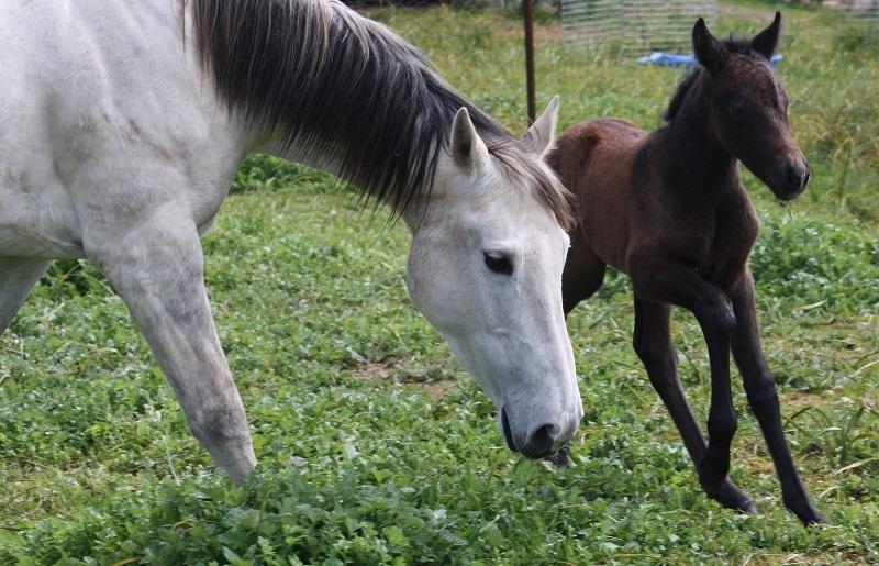 Rosina foal3 web Introducing Powderbark Rosina!