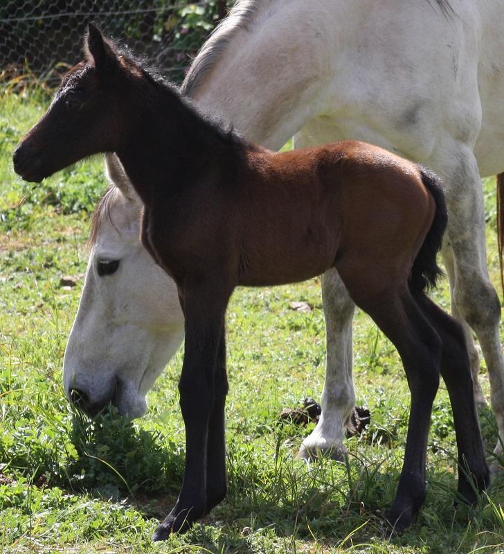 Rosina foal4 web Introducing Powderbark Rosina!