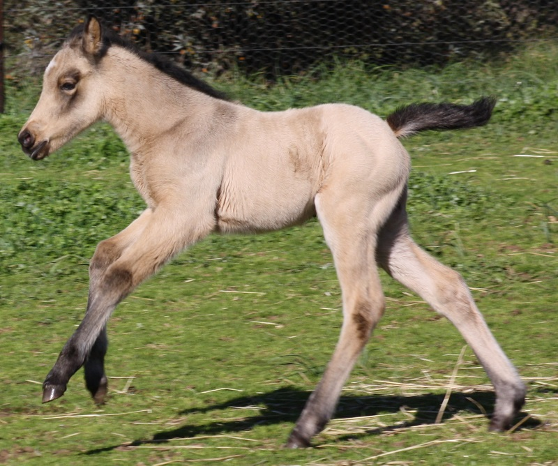 Esme foal2 web Introducing Powderbark Esmeralda!
