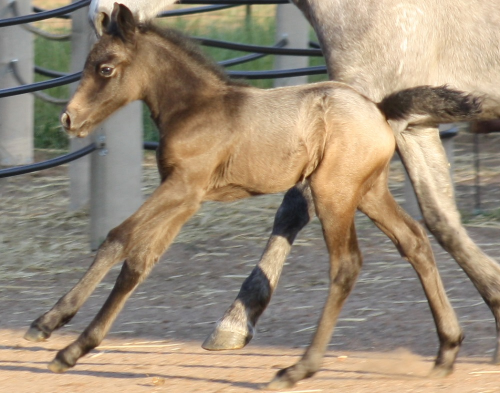 IMG 4310 crop email 2015 Foals