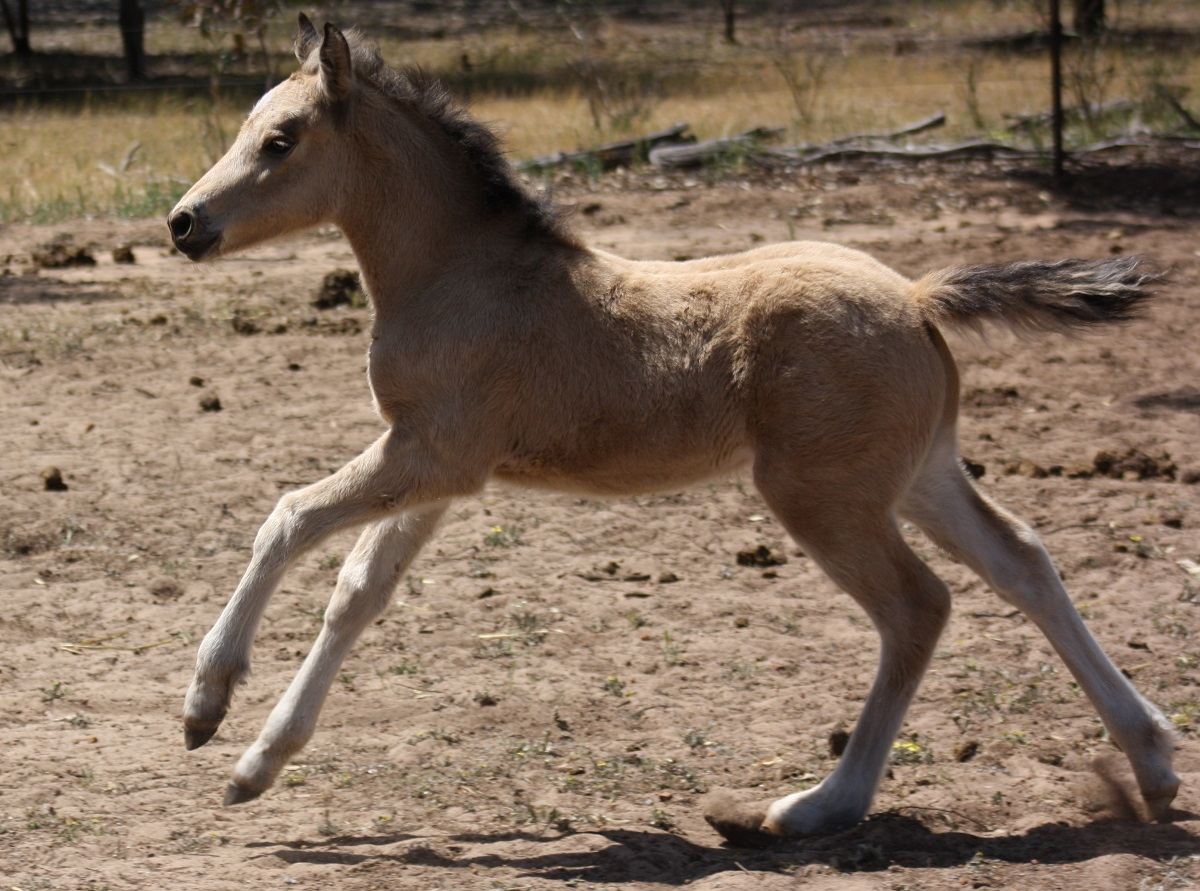 IMG 4619 crop email 2015 Foals