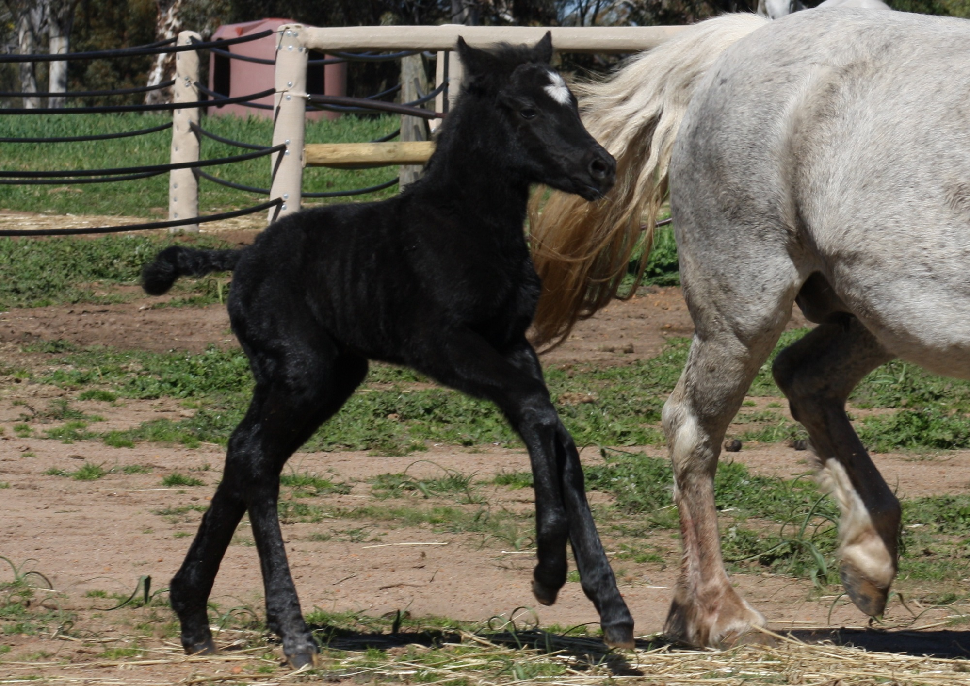 IMG 5077 crop email 2016 Foals