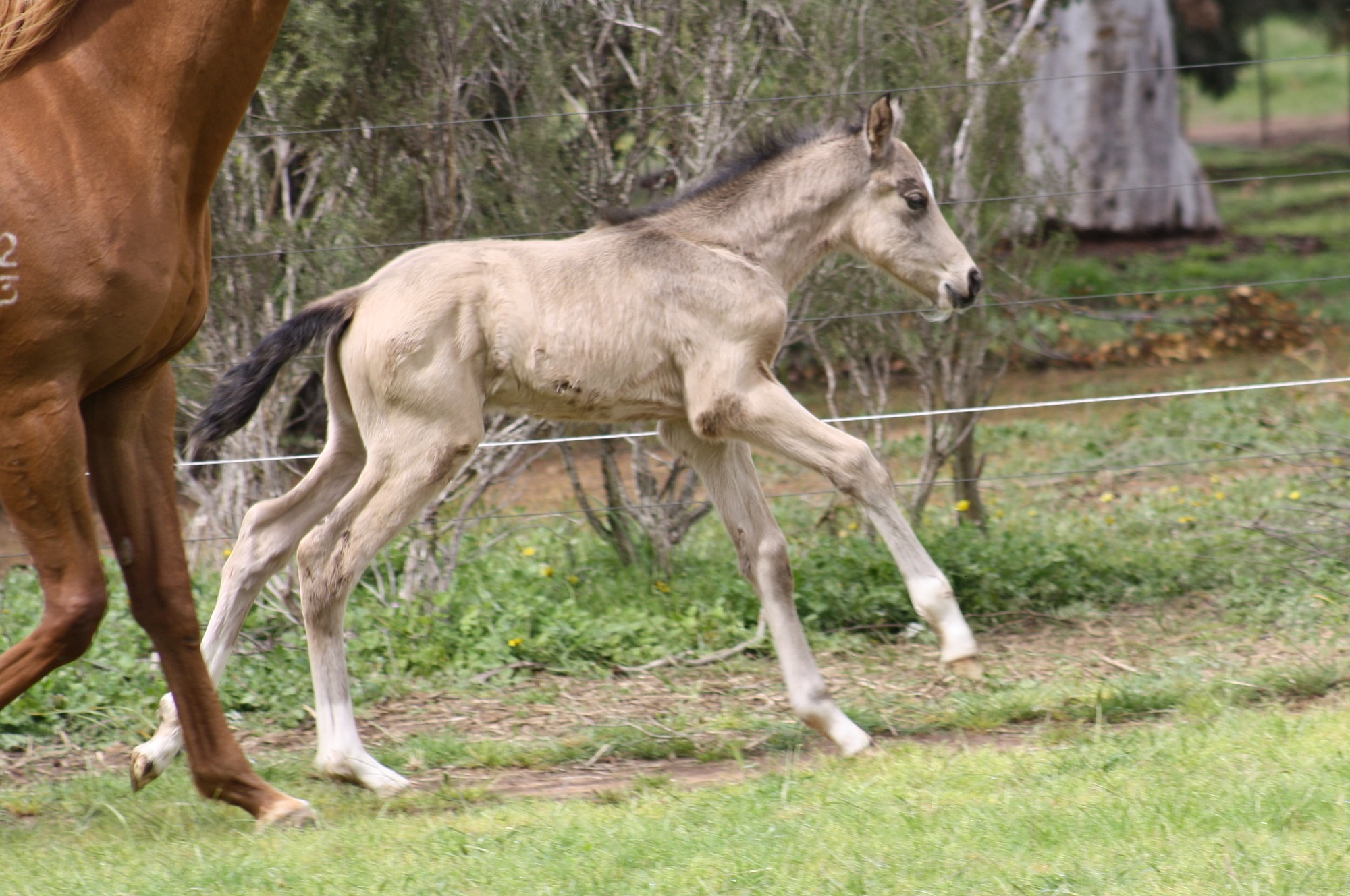 IMG 6392 crop email 2016 Foals