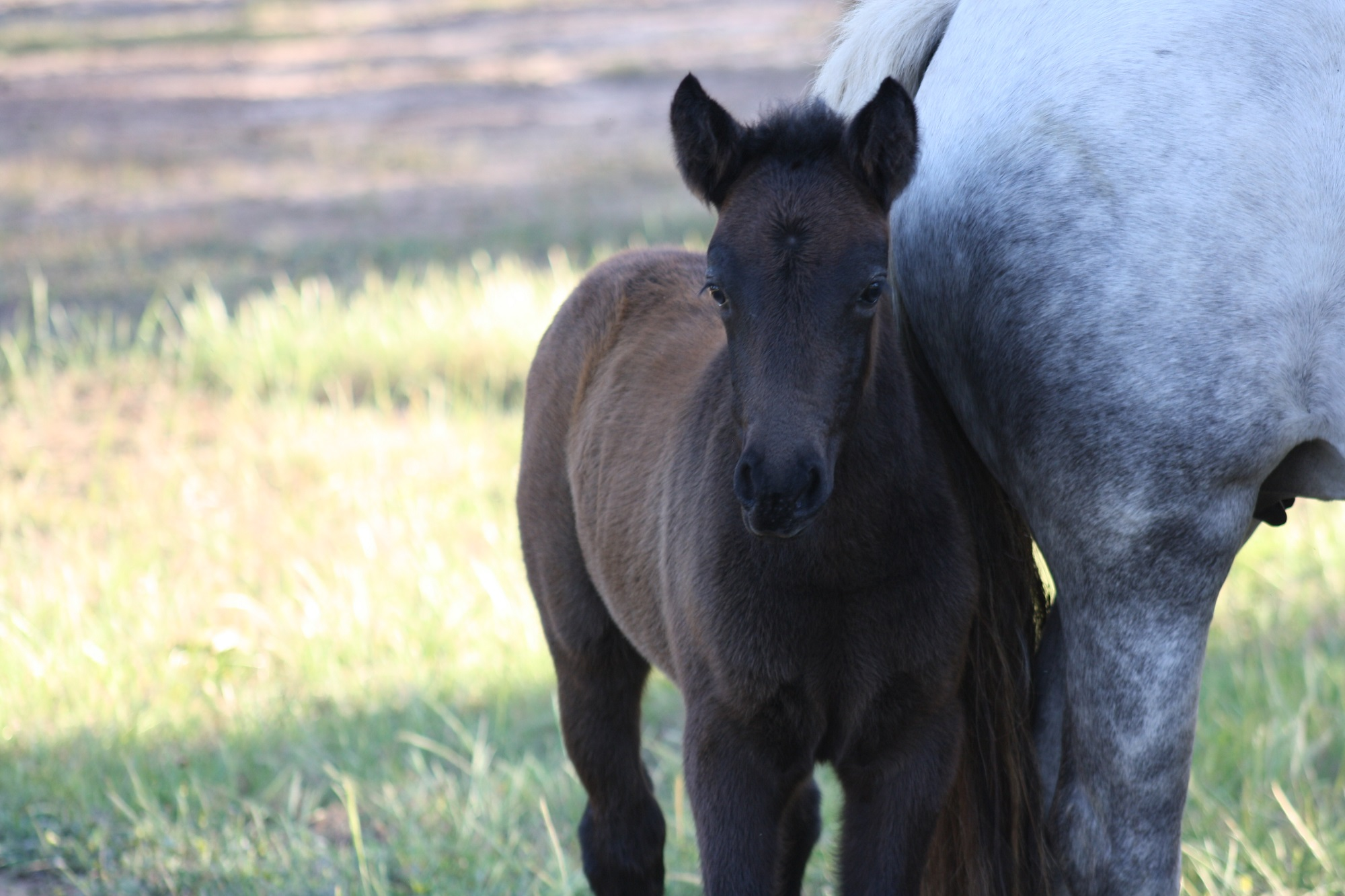 IMG 8152 email 2016 Foals