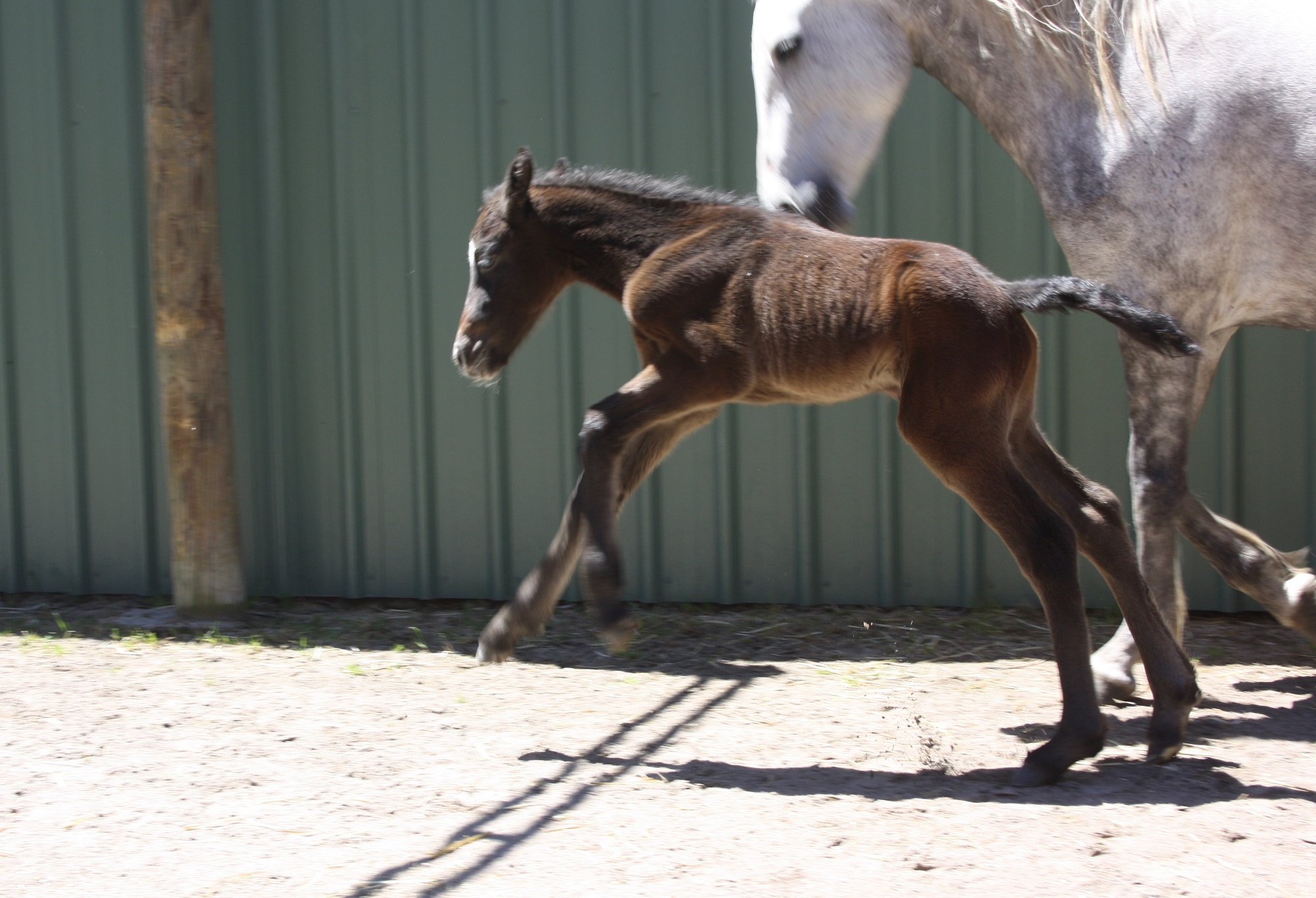 IMG 8298 crop email 2016 Foals
