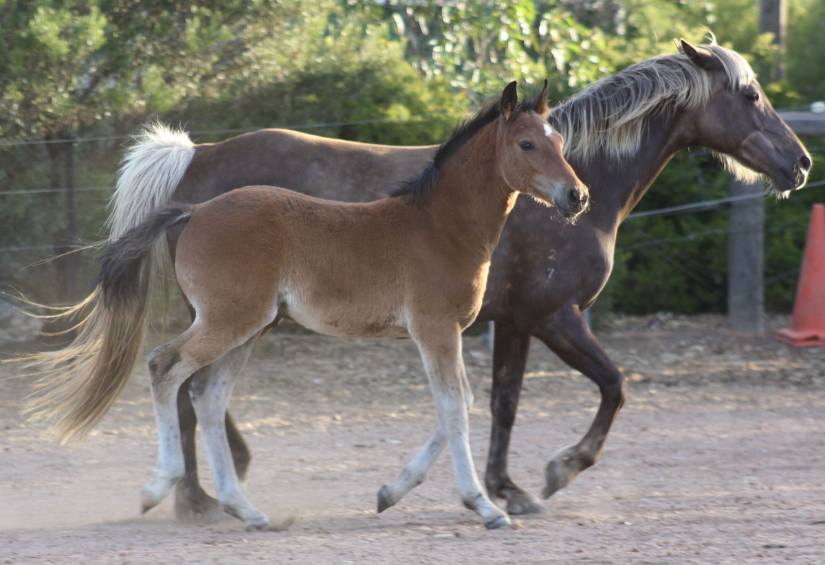 IMG 8943 crop email 2015 Foals