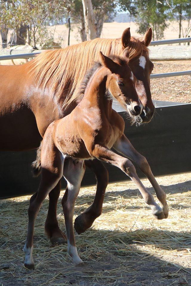 Aoibhinn foal web 2019 Foals