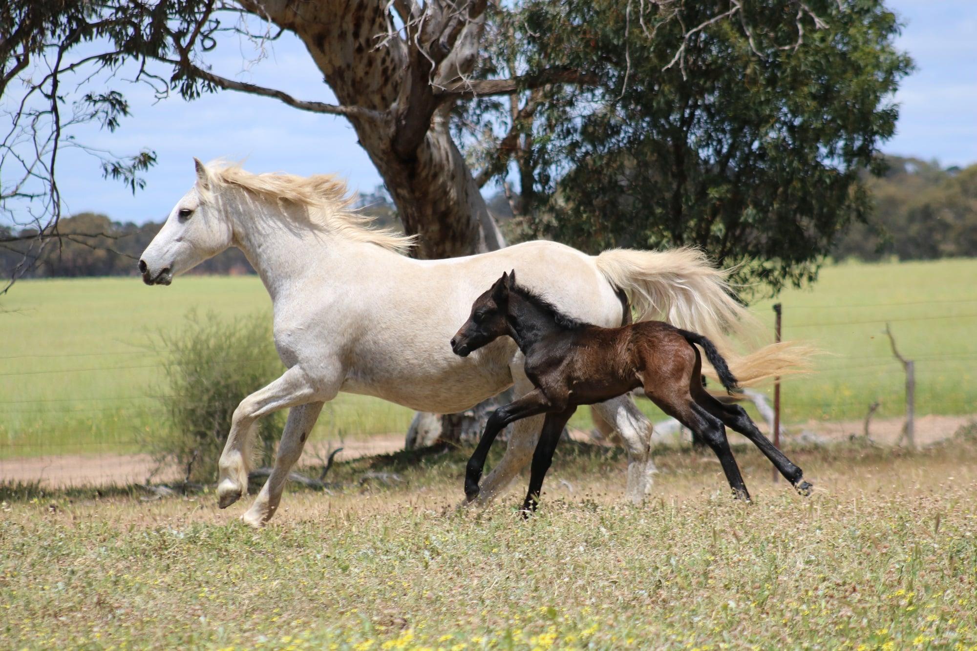 Fiona Drumcliff Oct19 web 2019 Foals
