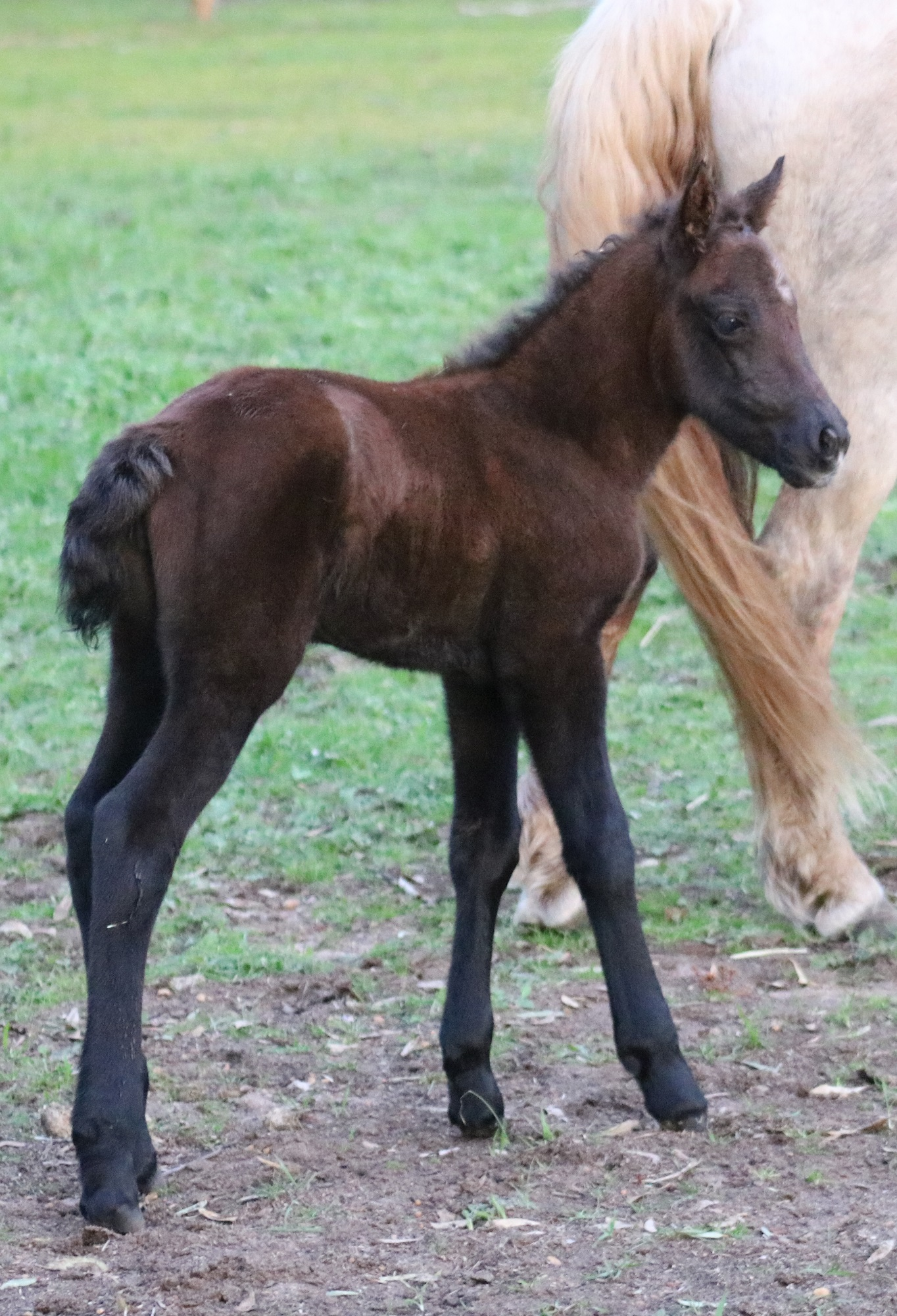 IMG 0376 crop email 2019 Foals