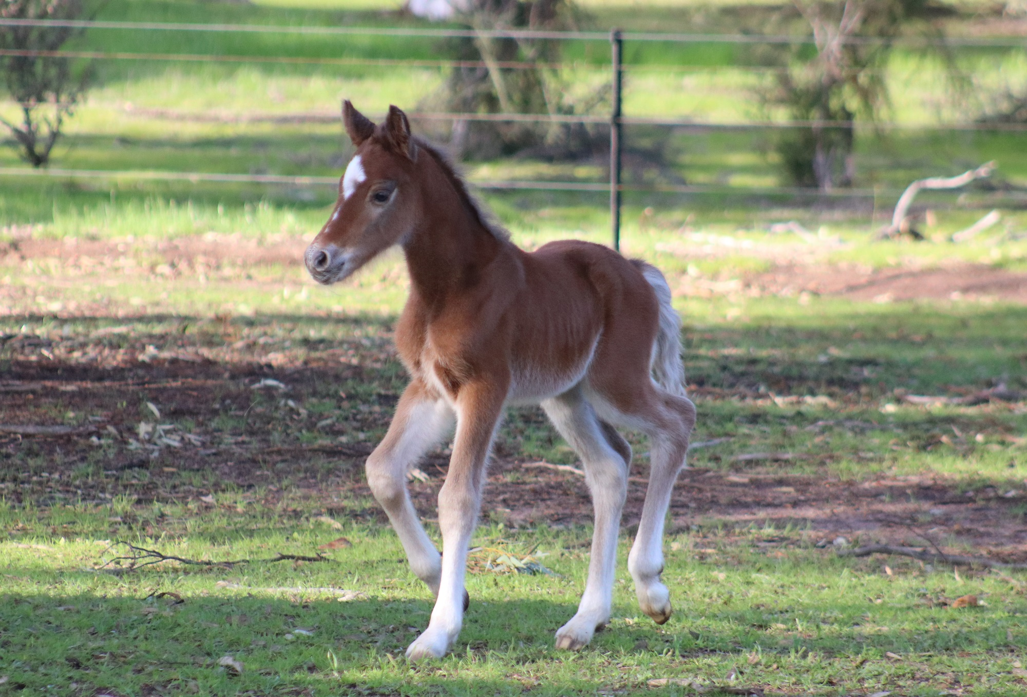 IMG 0870 crop email 2019 Foals