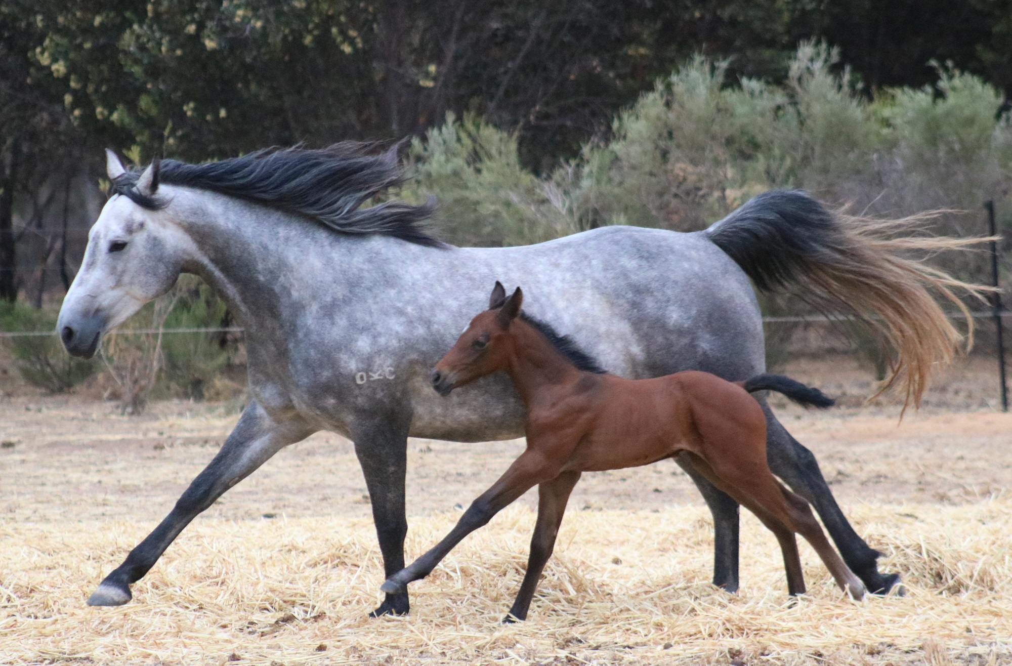 IMG 5723 crop email 2018 Foals