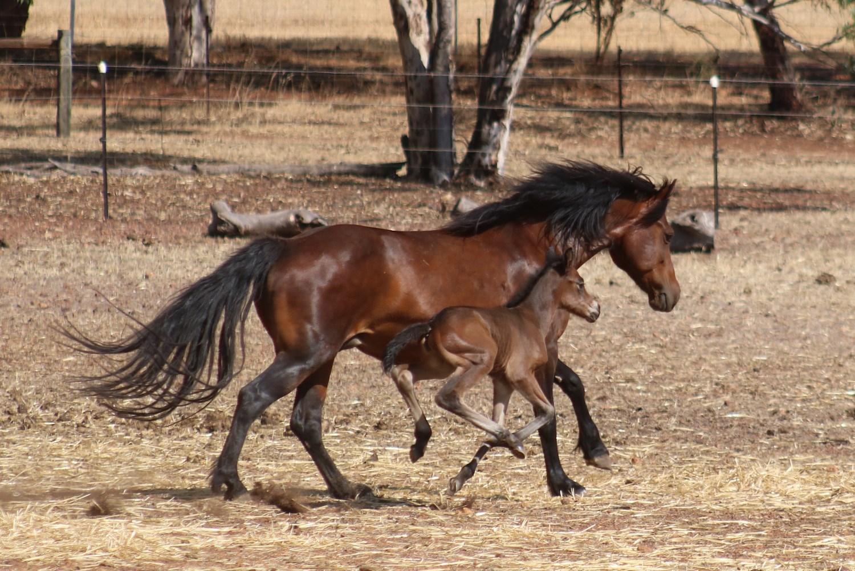 Sinead 2days web 2019 Foals