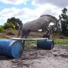 Loose Jumping- Powderbark Eireann